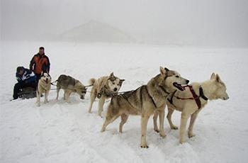 Event Ubytovanie - Psie záprahy